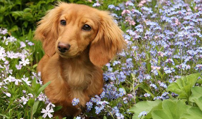 Tavasz, kert, kis�llat...