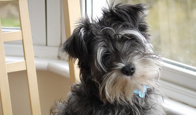 Honnan tudja a kuty�d, hogy nem sok�ra haza �rsz? - Telep�tia?