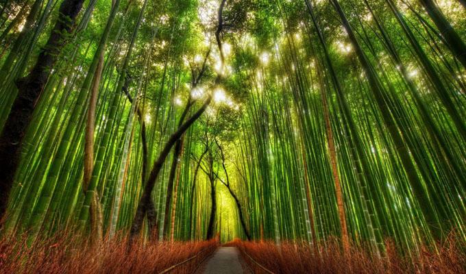 Ha nyugalomra v�gysz, itt megleled! - A k�pr�zatos bambuszerd�ben