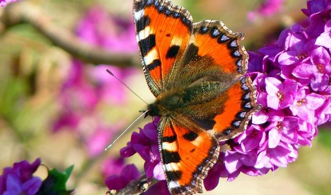 A pillang�k �zenete - Tavaszi pillang�j�sl�s
