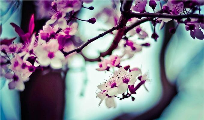 Mely érzelem hat rád mostanában? - A virágnyelvből kiderül