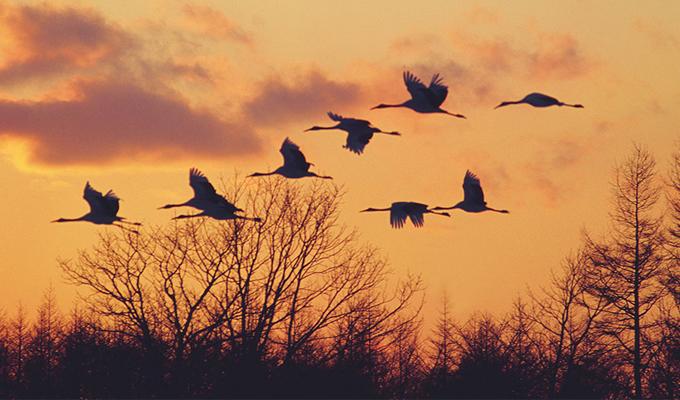 Jatinga - Avagy a kamikaze madarak falva