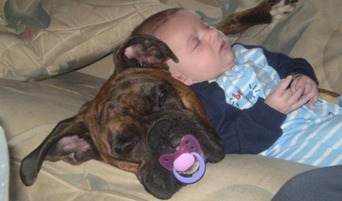 10 édes kép, mely bizonyítja, hogy a babák bárhol képesek elaludni