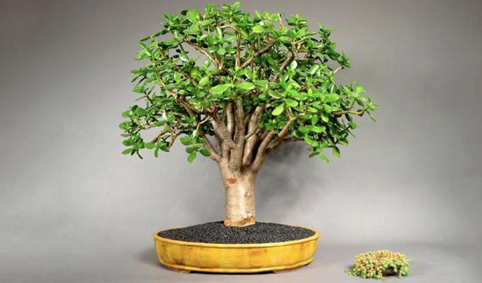 Ez a növény úgy vonzza otthonodba a pénzt, mint a mágnes