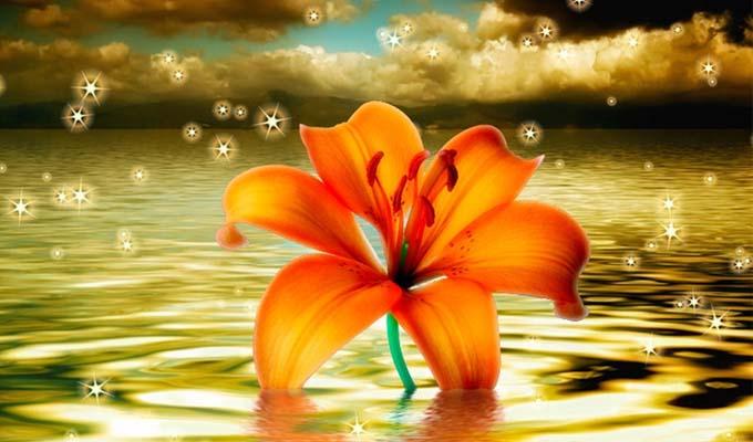 Mennyei virág-teszt - Milyen mennyei erénnyel láttak el az égiek, melynek tudatában sem vagy?