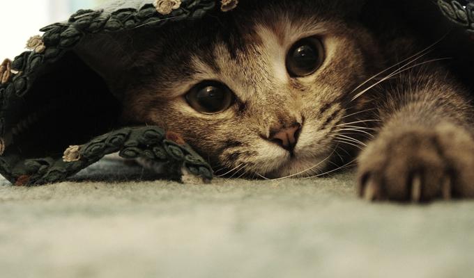 5 tanítás, amit érdemes ellesned és elfogadnod a cicádtól! - Lehet, hogy ő a mestered!