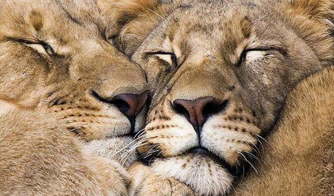Milyen állatra hasonlítasz szeretkezés közben? - Vicces Állati Szexhoroszkópból megtudhatod!