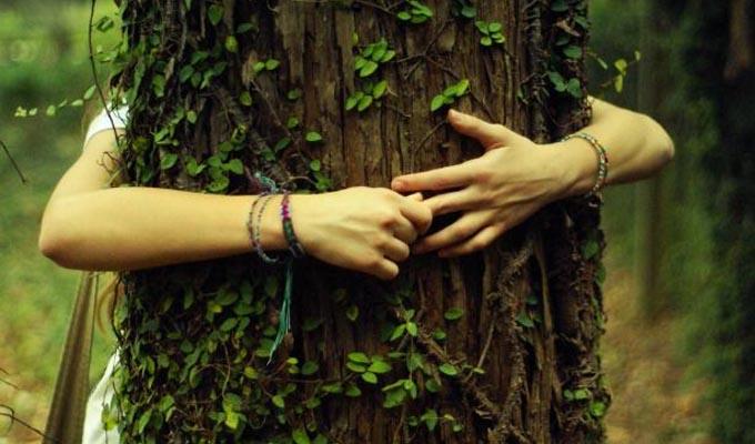 Tudtad, hogy a fák ölelése pozitív hatással van az egészségre? - Tudományosan is bizonyított!