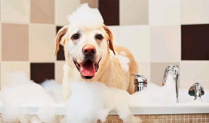 5 dolog, amit érdemes tudni, mielőtt a kutyádat megfürdeted - Illetve van itt 3 gyakori hiba is!