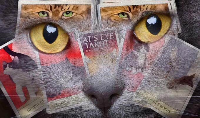 Mit kellene észrevenned most az életedben? - A Macskaszem Tarot utat mutat és megsúgja!