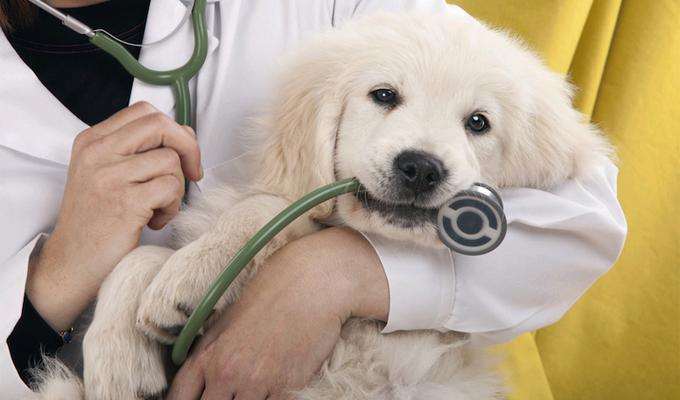 5 betegség, ami utolérheti a háziállatokat is - Érdemes erre kellő figyelmet fordítani!