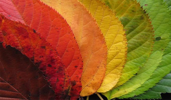 Melyik őszi falevél vonz leginkább? - Felfedi a valós karakteredet!