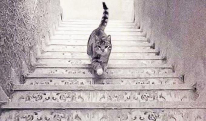 Felfelé, vagy lefelé megy a macska a lépcsőn? - Választásod felfedi lelked titkait!