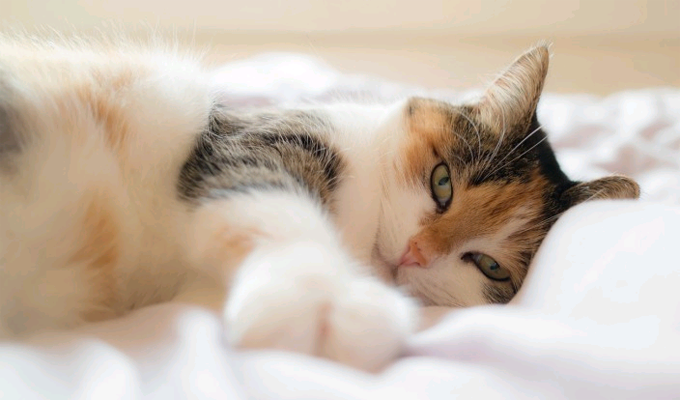 3 dolog, amit a macskád taníthat a buddhizmusról - Győződj meg róla!