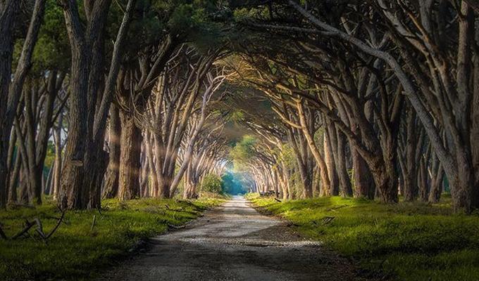 Melyik ösvényen sétálnál végig a céljaid felé? - Feltárja a személyiségedet és jövődet is!