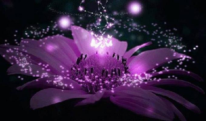 Melyik virág képviseli a személyiségedet? - Megmutatja, mit jelentesz az emberek számára