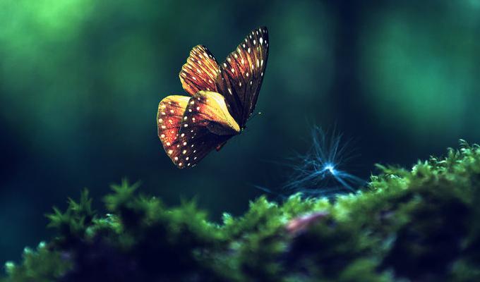 Válassz egy pillangót és fedezd fel, mi rejlik a tudatalattidban! - Képes lélekelemző teszt