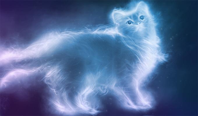 A macskák nagyon empatikus lények és elősegítik a fizikai és lelki gyógyulást!