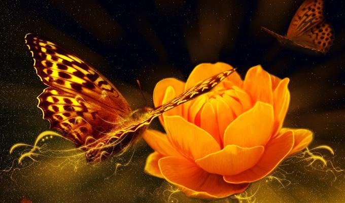 Válassz egy pillangót és fedezd fel a lelked titkait! - Képes személyiségteszt