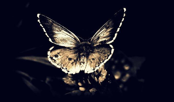 Milyen változásokon mész keresztül a nyáron? - A Halálfejes Pillangó megjósolja!