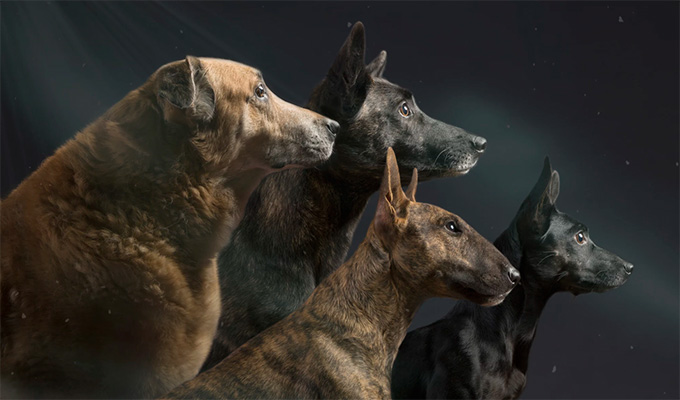 7 állat és szimbolikus jelentése - Tudd meg, milyen üzenetet rejt, ha találkozol vele