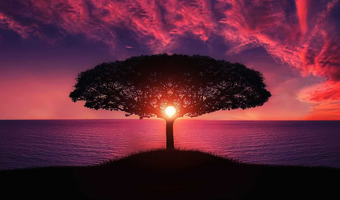 Válassz egy fát, és tudd meg, mi jellemzi leginkább a személyiségedet! - Képes önismereti teszt