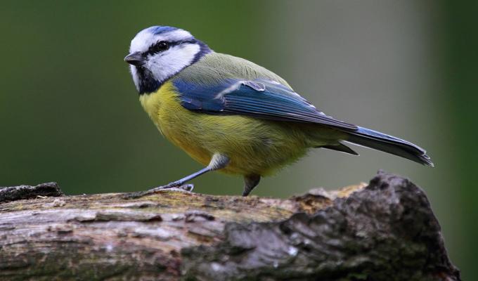 Felismered a madarakat képeken? - Játékos teszt